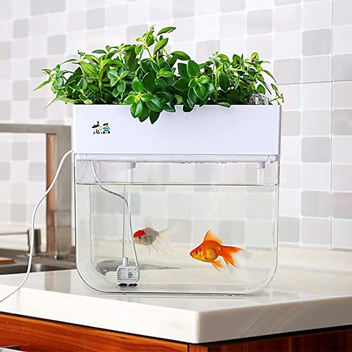 The Best Fish Garden Tank
