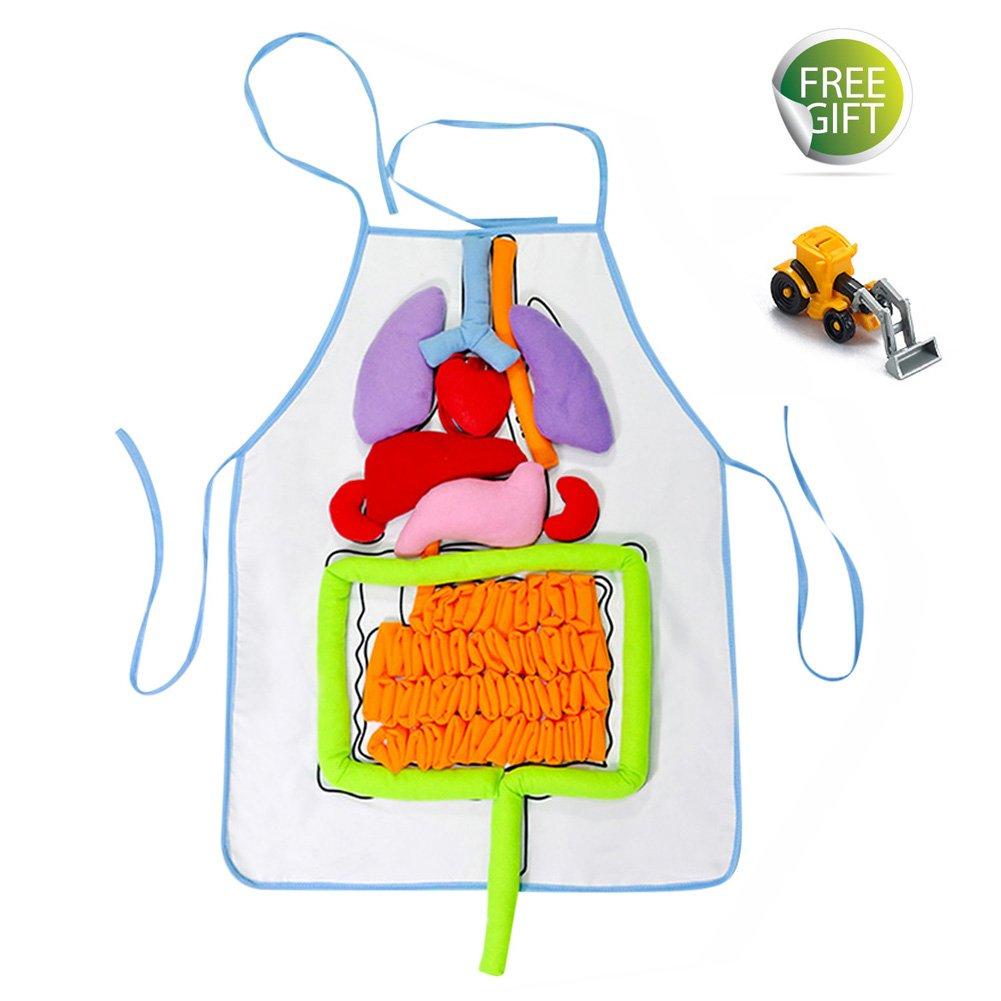 LiuYX Anatomy Apron Organ Kindergarten 3D Viscera Teaching Utensil Intellectual Development Early Educational Apron for Kids Children