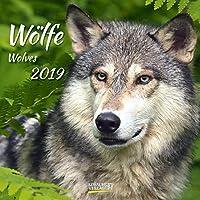 Wölfe 2019: Broschürenkalender mit Ferienterminen. Fasziniernde Bilder von Wölfen. 30 x 30 cm