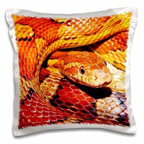 3dRose Corn Snake. Popular Image.-Pillow Case, 16 by 16