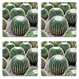 Liili Square Coasters Image ID 22091994 Echinocactus grusonii popularly known as the Golden Cactus