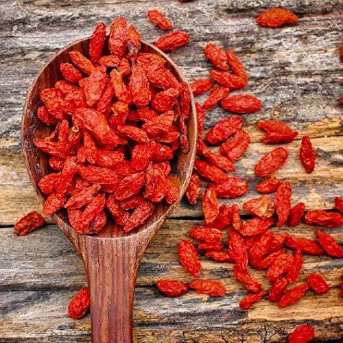 Berries Seed - David's Garden Seeds Herb Goji Berry SL8711 (Red) 500 Non-GMO, Heirloom Seeds