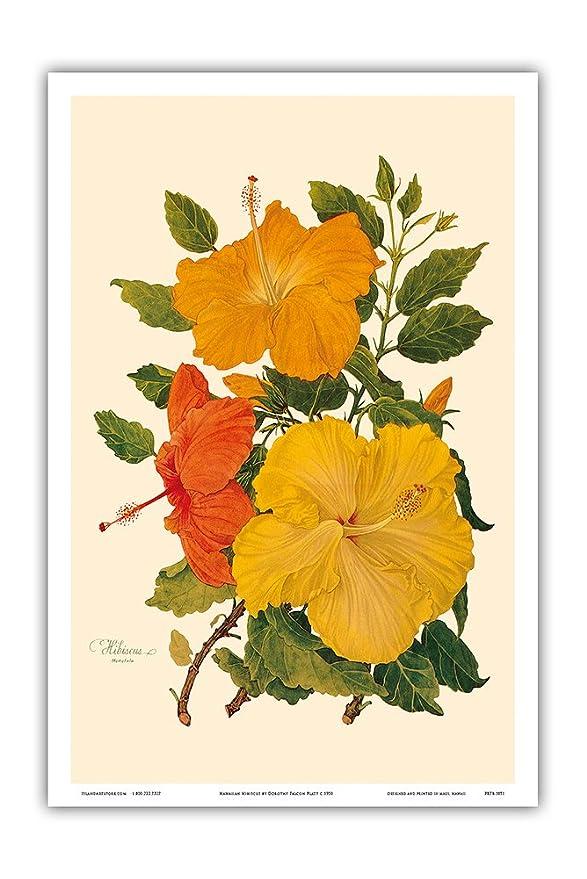 Amazon.com: Hawaiian Hibiscus - Honolulu, Hawaii - Vintage Botanical ...