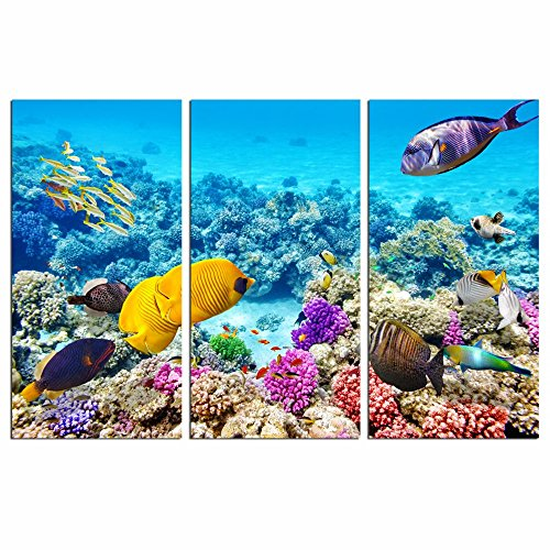 sechars - Tropical Sea Canvas Wall Art,Amazing Underwater Fish Photo Prints on Canvas Gallery Wrapped Perfect Artwork for Living Room Decoration Each Panel 16x32inches ()