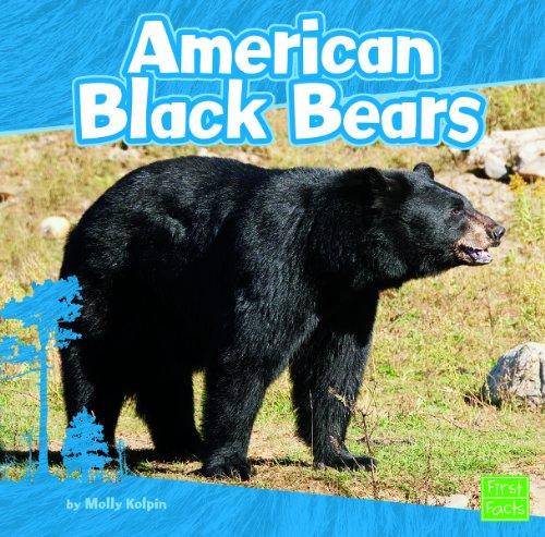 Black Bears (American Black Bears)