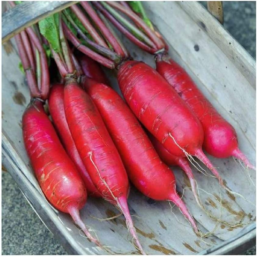 David's Garden Seeds Radish China Rose 7344 (Red) 200 Non-GMO, Heirloom Seeds