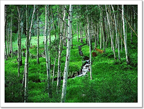 Aspen Grove and Ranch, Maroon Bells Wilderness Area, Colorado Paper Print Wall Art (12in. x 16in.)