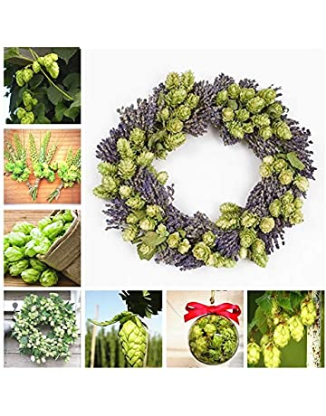 AGROBITS 30 PCS Hops Plant Humulus Lupulus The Brewing Beer Garden Planta or Tea Herb Brew