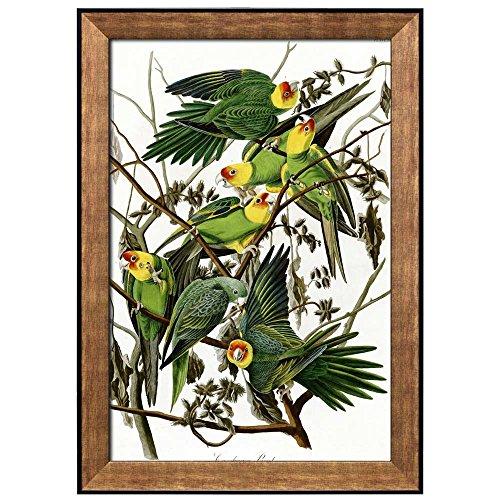 Beautiful Illustration Inside of an Elegant Frame of a Carolina Parakeets by John James Audubon Framed Art