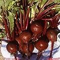 Everwilde Farms - Organic Detroit Dark Red Beet Seeds - Gold Vault Seed Packet