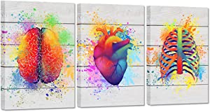 ZingArts 3 Pieces Canvas Wall Art Humain Barin Anatomical Heart Thorax Abstract Science Colorful Artwork on Rustic Wood Background Stretched and Framed For Hospital Clinic Decor Ready to Hang