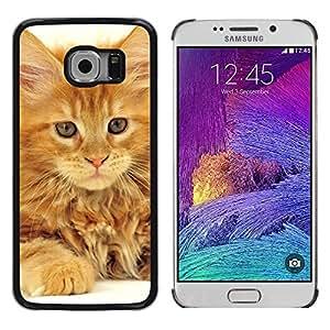 TopCaseStore / la caja del caucho duro de la cubierta de protección de la piel - Maine Coon Ginger Orange Garfield Cat - Samsung Galaxy S6 EDGE SM-G925