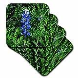3dRose LLC Bluebonnet Ceramic Tile Coaster, Set of 8