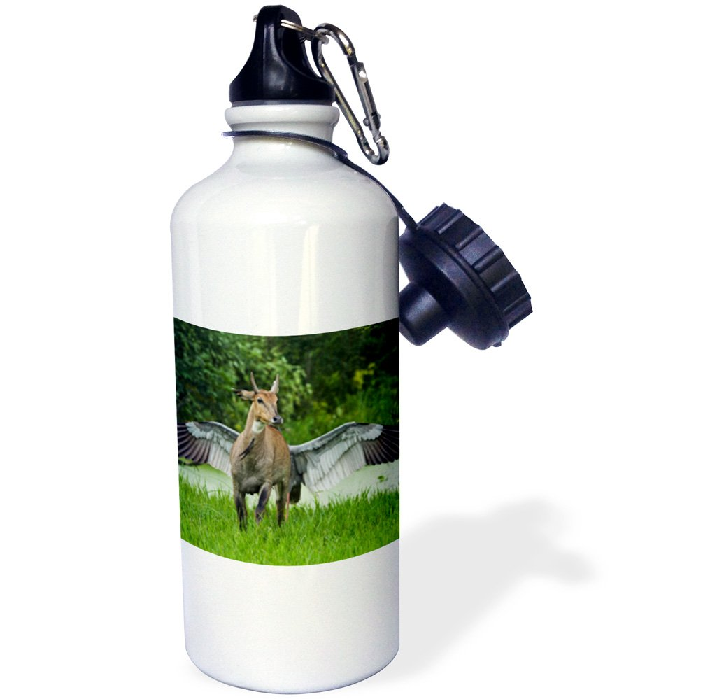 Danita Delimont - Animals - Indian Saras Crane chasing away the Blue bull, Keoladeo NP, India. - 21 oz Sports Water Bottle (wb_225626_1)