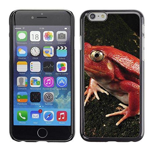 "Premio Sottile Slim Cassa Custodia Case Cover Shell // V00003946 grenouille tomate // Apple iPhone 6 6S 6G PLUS 5.5"""
