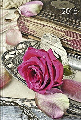 lady-timer-rose-2016