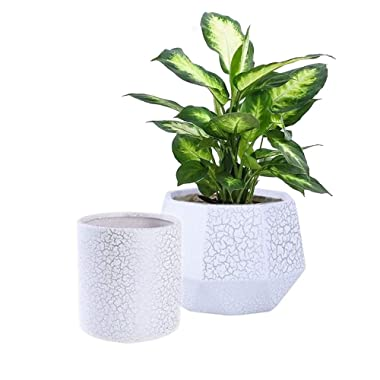 Set of 2 Ceramic Flower Pot Garden Planters,6  Outdoor Indoor Plant Containers with Drainage Hole,White and Silver Detailing