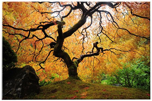 low in The Dark Canvas Wall Art, Maple Tree Japanese Garden ()