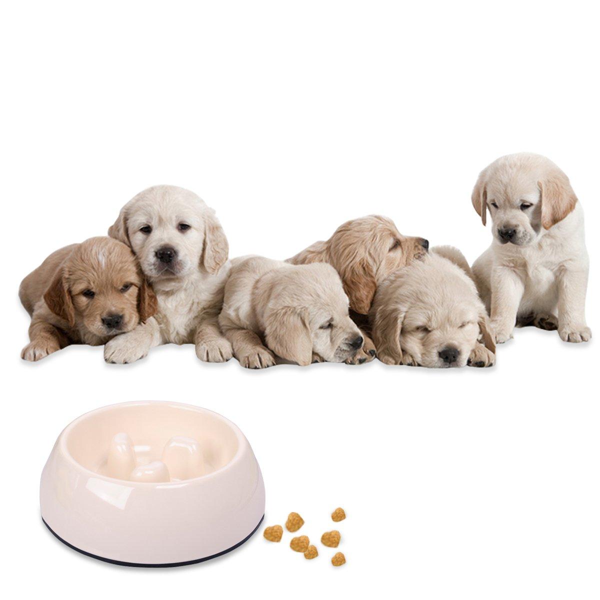 PETCUTE Fun Alimentador Lento Antideslizante Mascota Cuenco Dieta Saludable Interactiva Dieta Bloat Stop Bowl Para Perros y Gatos Pequeños Blanco: ...