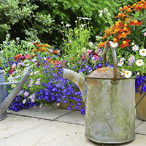 Fragrance Bouquet Flower Rocket Seed Disc - Concentrated Flower Planting Gardener Indoor Outdoor Kit - by Garden Innovations