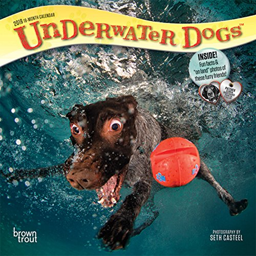 Pet Calendar - Underwater Dogs 2018 7 x 7 Inch Monthly Mini Wall Calendar, Pet Humor Puppy (Multilingual Edition)