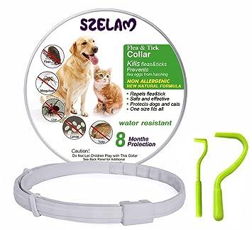 Collar de pulgas para perros 8 meses de protección Stop Bichos y picazón: Amazon.es: Productos para mascotas