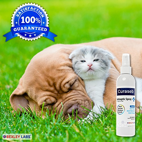 Curaseb Chlorhexidine Spray For Dogs Amp Cats Anti Itch