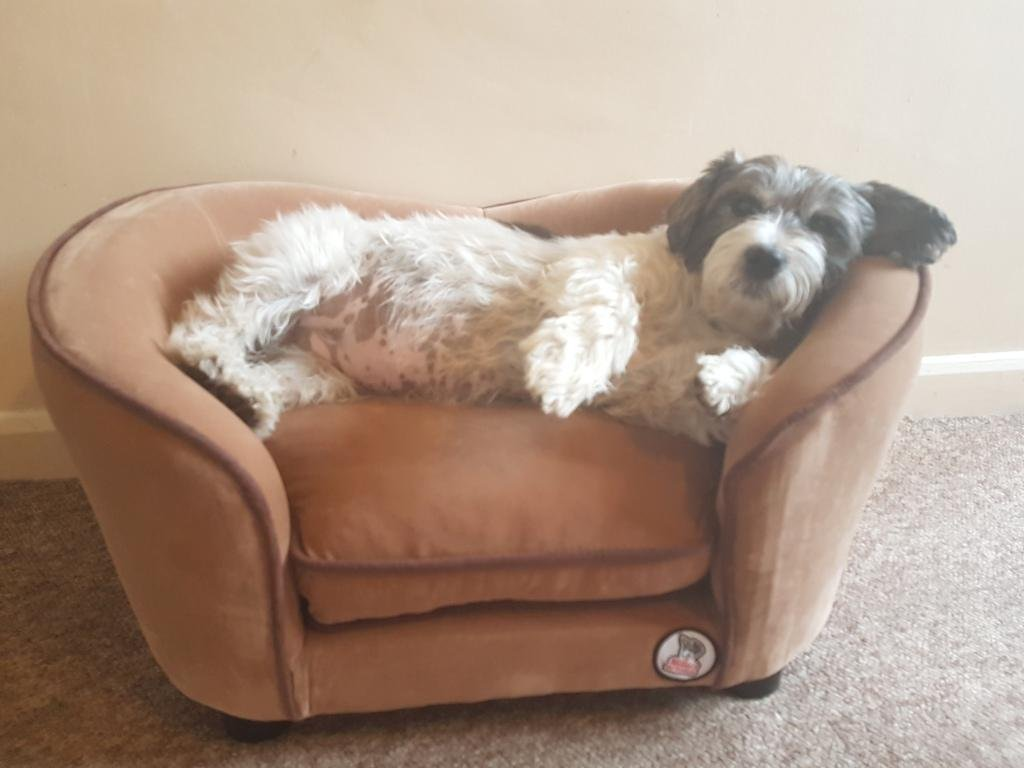 """""""Millies"""" Ultimate luxury Beige Faux Micro Suede Dog Bed , Cat , Pet Sofa, luxury comfort for your pet MILLIES PET PRODUCTS"""