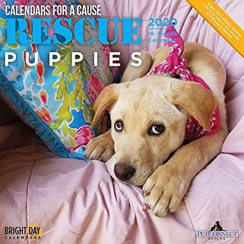 2020 Rescue Puppies Wall Calendar by Bright Day, 16 Month 12 x 12 Inch, Cute Dogs Puppy Animals for a Cause Canine Sherpherd Terrier Collie