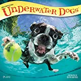 Underwater Dogs 2018 12 x 12 Inch Monthly Square Wall Calendar with Foil Stamped Cover by Plato, Pet Humor Puppy