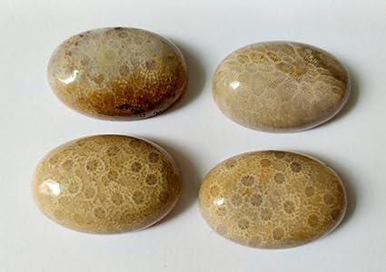 Black Fossil Coral Gemstone Organic Designer Cabochon Matching Earring Pair Jewelry Making Handmade Cheap Supply # 17454