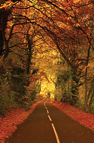 JP London SPMUR0079 Peel & Stick Removable Wall Mural Open Road Harley Forest At 2' Wide By 3' High Fully Removable Peel & Stick Wall (Harley Open Road Mural)