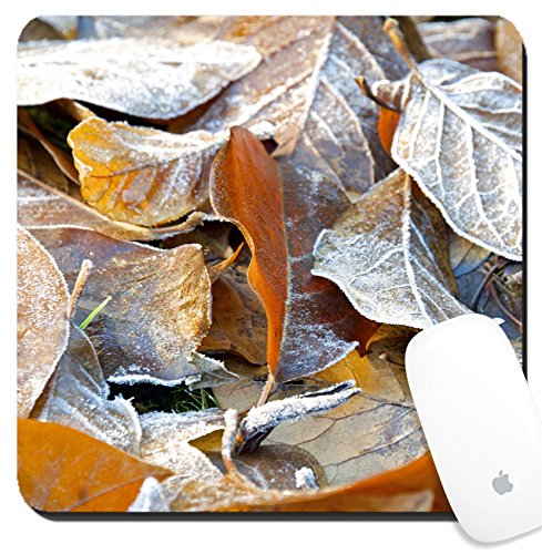 Luxlady Suqare Mousepad 8x8 Inch Mouse Pads/Mat design IMAGE ID: 24807725 Garden leaves collected and frozen - Best Tracking Overnight