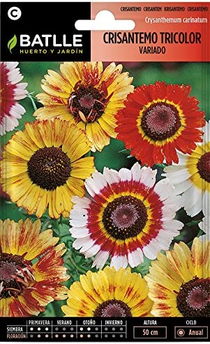 Semillas de Flores - Crisantemo Tricolor variado - Batlle: Amazon.es: Jardín