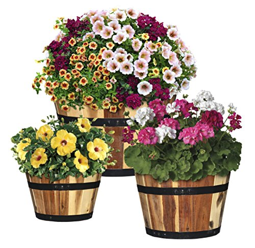 GARDENGOODZ 5/800/3 Acacia Wood Barrel Planter, Set for sale  Delivered anywhere in USA