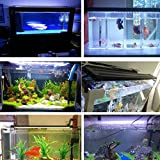 Bjour LED Aquarium Light Extendable Brackets Fish