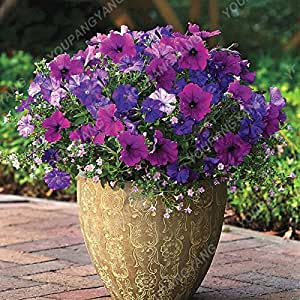 100 piezas / Semillas Paquete Petunia jardín de la flor de la semilla de la petunia Bonsai Semillas Mirage Multi-color de la selección fácil de cultivar envío Ciruela