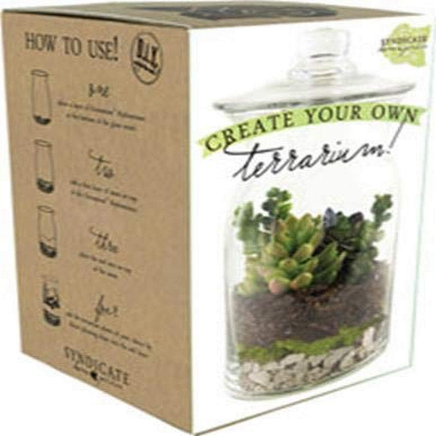 Amazon Com Syndicate Sales Diy Terrarium Kit Garden Outdoor