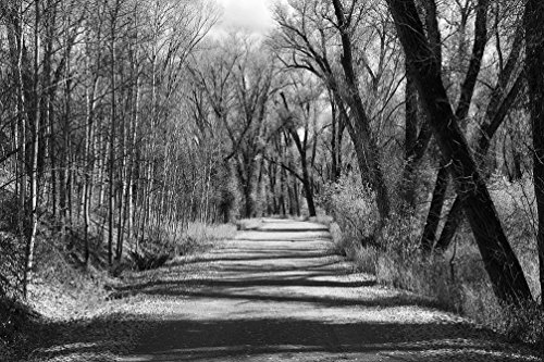 Vintography 18 x 24 B&W Photo Path Through Some Woods at The Sheriff Ranch at The headwaters The Colorado River Near Hot Sulphur Springs in Grand County, Colorado 2015 Highsmith 70a