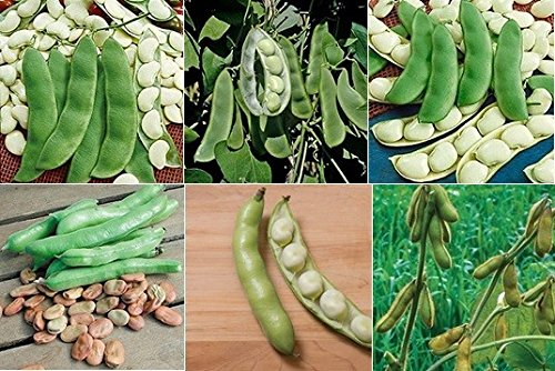 David's Garden Seeds Collection Set Bean Fava, Lima, Soy SL091 (Multi) 6 Varieties 300 plus Seeds (Open Pollinated, Heirloom, - Bean Collection