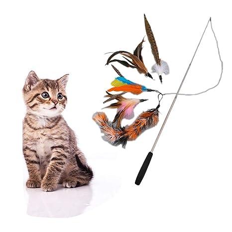 Feli546Bruce Juguete para Gato, Juguete para Gato, 5 Piezas de ...