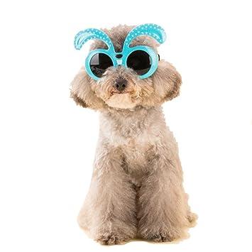 FENG Pet - Gafas Perro Gafas de Sol Teddy Bichon Gafas de ...