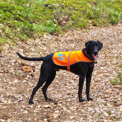 SafetyPUP XD Dog Reflective Vest. Sizes to Fit Dogs 14 lbs to 130 lbs. Blaze Orange Hi Vis Dog Vest Protects Dogs from Cars & Hunting Accidents. (Large 61lbs - 100lbs)