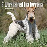 Wirehaired Fox Terriers 2018 12 x 12 Inch Monthly Square Wall Calendar, Animals Dog Breeds Terriers (Multilingual Edition)