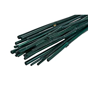 Gardener's Blue Ribbon BB3 3-Feet 3 Foot Bamboo Stakes, 6-Ounce