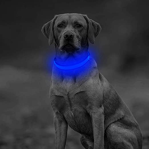Clan-x LED Dog Collar, USB Rechargeable Light Up Collar, Adjustable Mesh Webbing Pet Safety Collar Make Your Dog Glowing in the Dark(S, Blue)