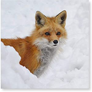 VinMea Framed Canvas Printing Wall Décor Red Fox in The Snow, Canvas Art Print Ready to Hang Wall Decoration for Living Room/Bed Room