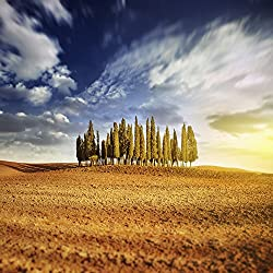 Sunset in a golden field with a row of cypress trees Italy Tuscany Poster Print (28 x 28)