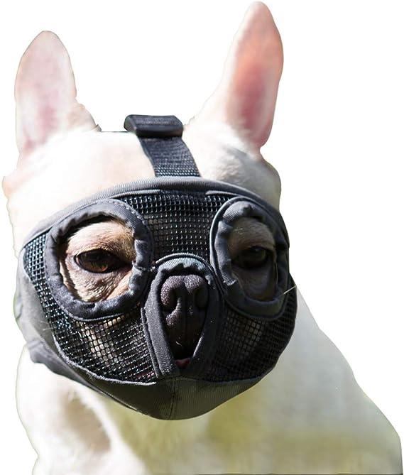Jyhy Maulkorb Für Hunde Mit Abgeflachter Schnauze Verstellbar Atmungsaktiv Englische Bulldogge Französische Bulldogge Pekingese Shih Tzu Mops Auch Für Katzen Geeignet Grau Die Augen M Haustier