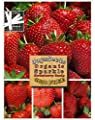 Organic Sparkle Strawberry 315 Seeds UPC 600188191431 + 1 Free Plant Marker - Most Delicious Strawberry on Market